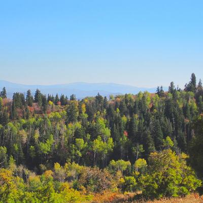 Timber Block Mountain View